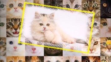 Текст песни - Кошки, Кошки