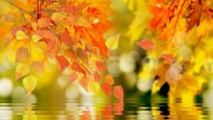 Осень золотая - текст песни про осень