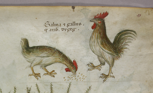 Two roosters