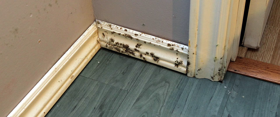 106 tips on mold removal prevention