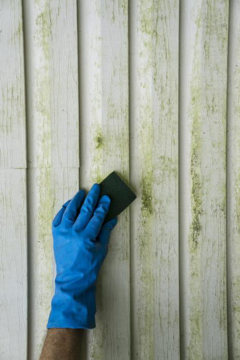 Mold Inspection Kirkland