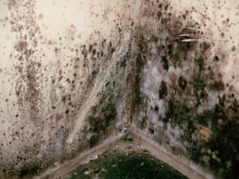Image Result For How To Get Rid Of Black Mold On Ba T Walls