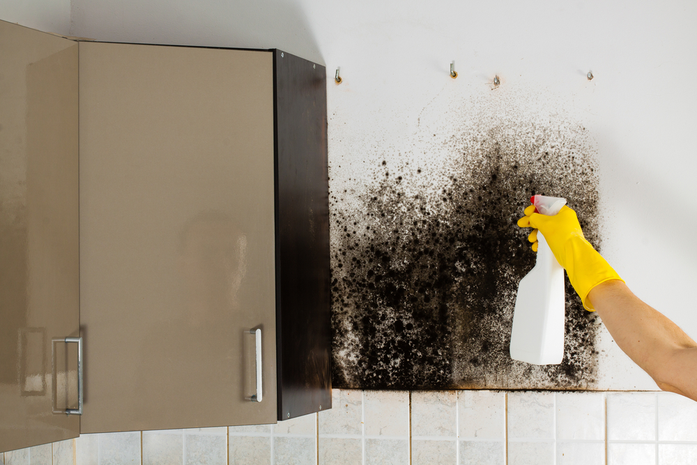 How To Get Rid Of Black Mold The Do S And Dont S Roy S Restoration