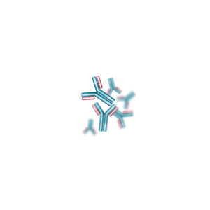 Anti-Sheep IgG (H+L) Rabbit Polyclonal