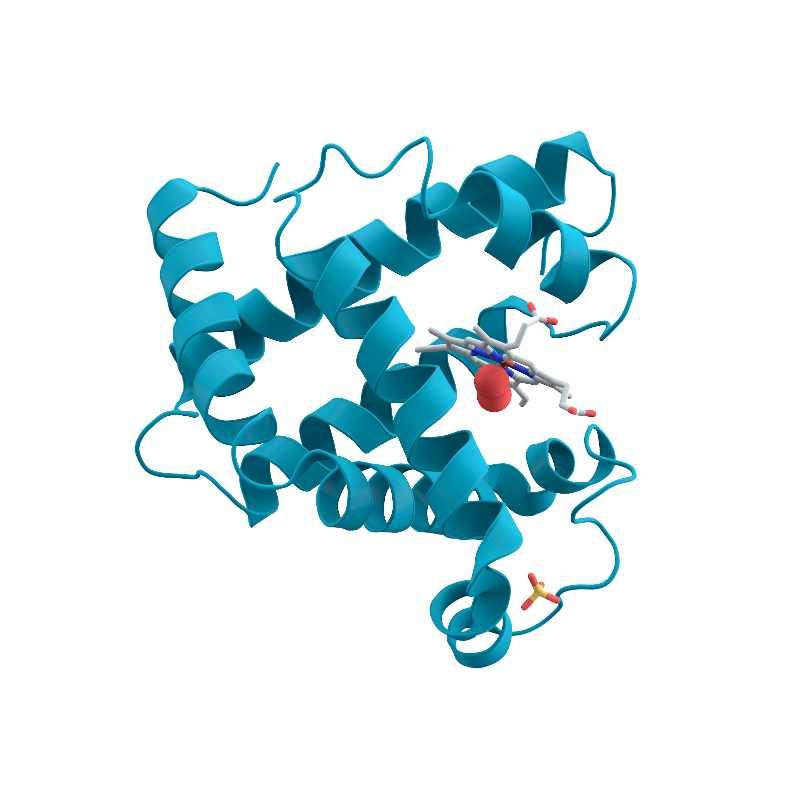 Human Myoglobin Antibody