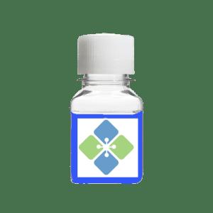 Laemmli Sample Buffer 2X Solution