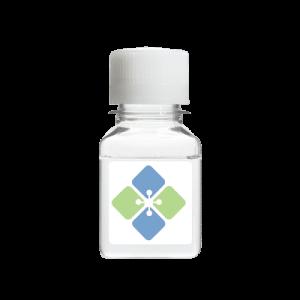 Src Kinase Reaction Buffer Solution