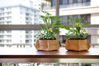 Woolly Pocket Planters