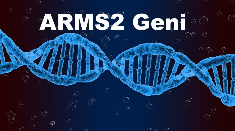 ARMS2 Geni Nedir?