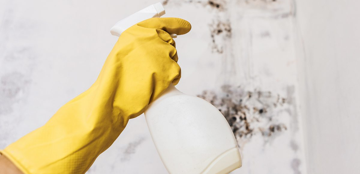 Mildew Vs Mold What Is The Difference Molekule Blog