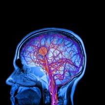 Otizmin İnsan Beyninde Nasıl Gelişebileceğine Dair Yeni Bilgiler