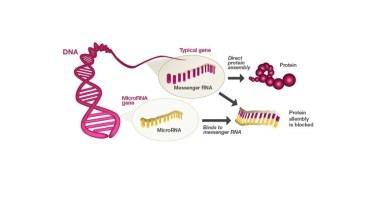 Yeni Bir Keşif; Gen Baskılayıcıları miRNA'lar