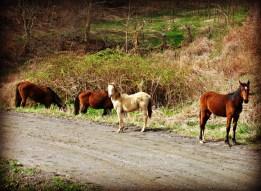 Road Horses - 2014