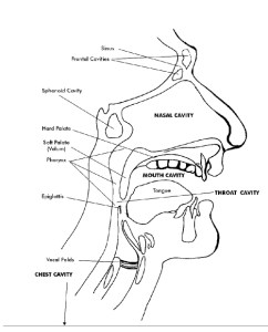 Resonance Chambers of the Vocal Tract