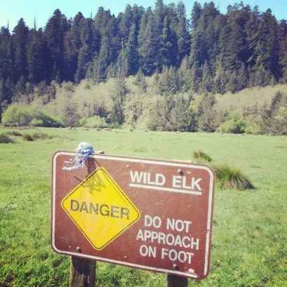 Tempted to approach the elks...