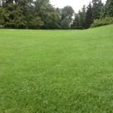 Кругом травка как на поле для гольфа