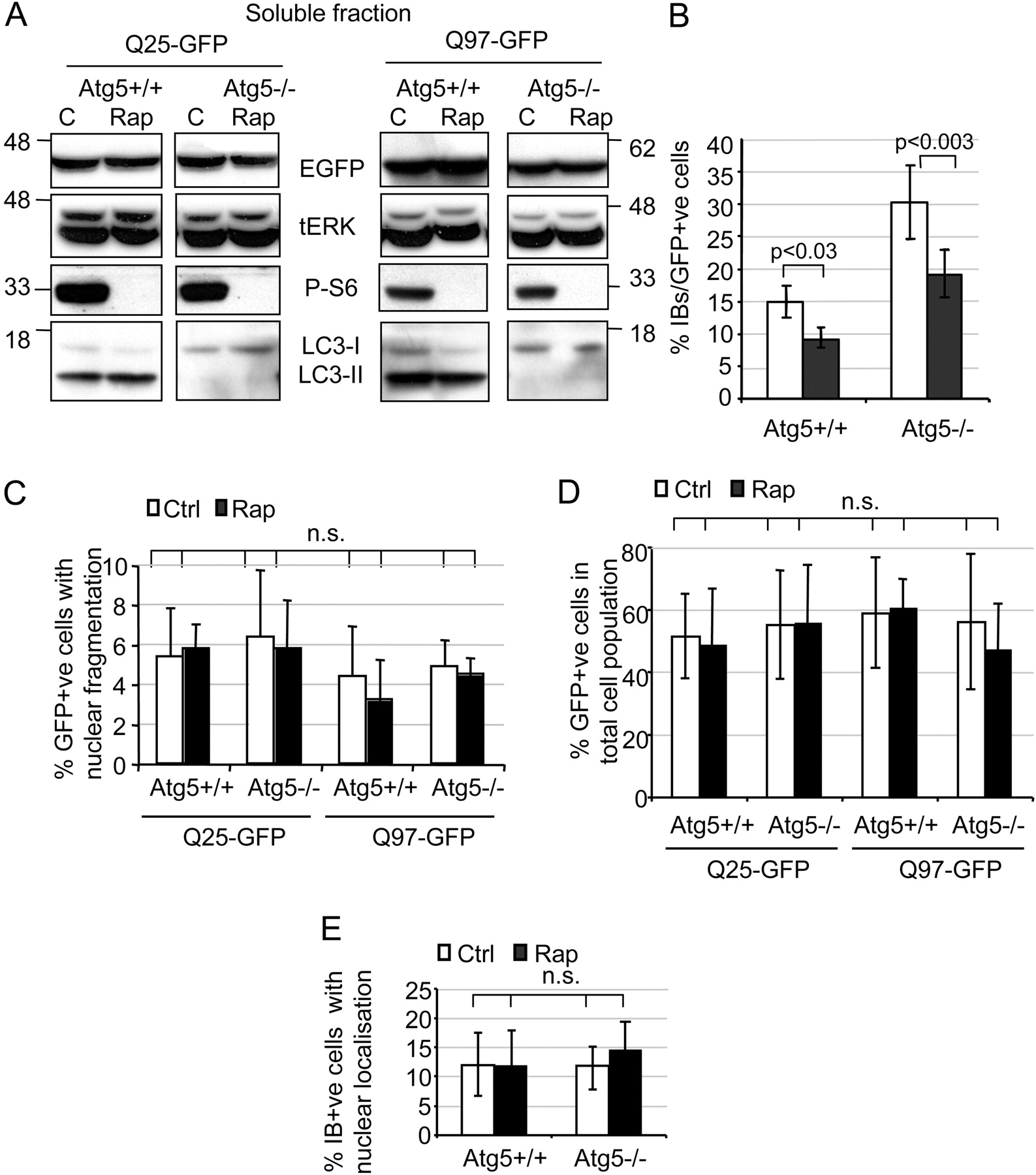 Rapamycin Inhibits Polyglutamine Aggregation Independently Of Autophagy By Reducing Protein