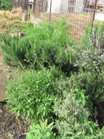 Herb area