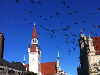 Birds over Munich