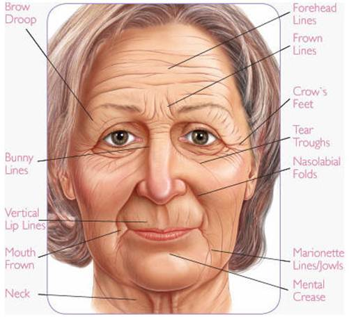 Description: Decode secret of wrinkles