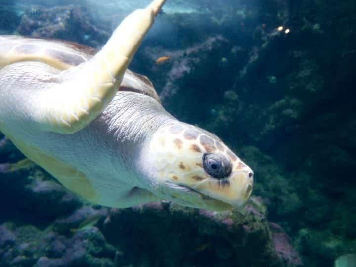 zien en doen in brest oceanopolis