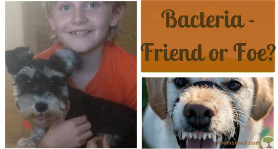 Bacteria – Friend or Foe?