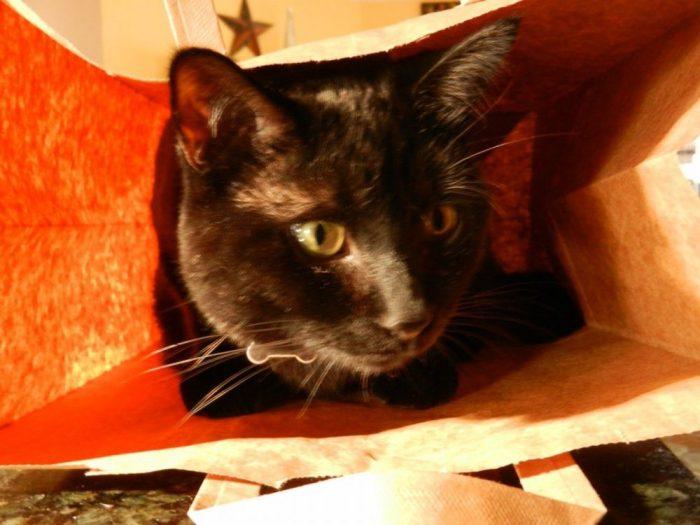black cat in a bag