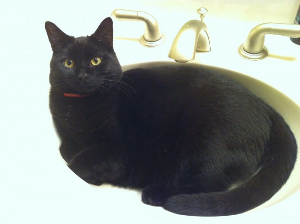 Kitty in the sink. Good thing we have a double sink and I can use my husband's to brush my teeth!