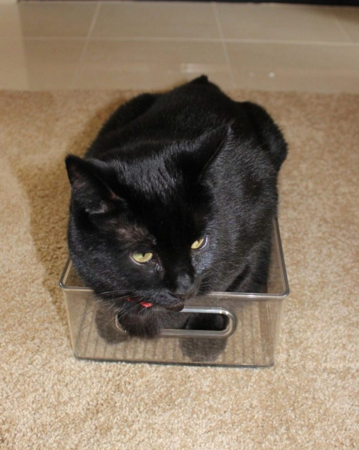 Black cat in a small box.