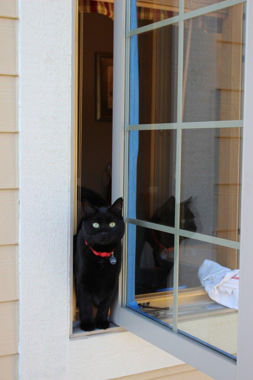My kitty inspecting my taping job.