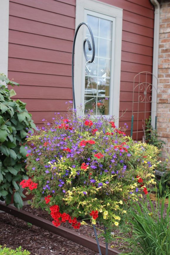 Hanging basket to add some height to the flower garden.