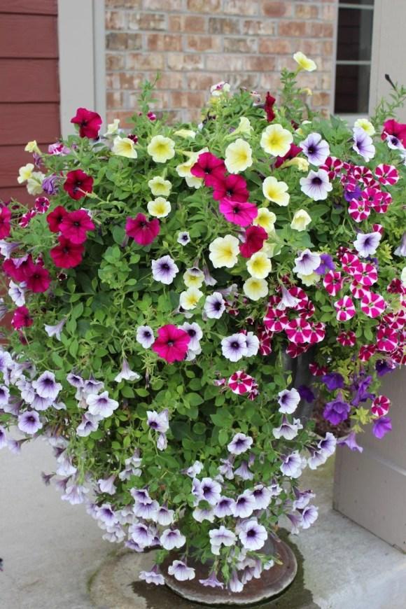 pretty planters, planter ideas