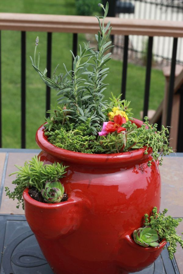 Succulent & Perennial Strawberry Pot