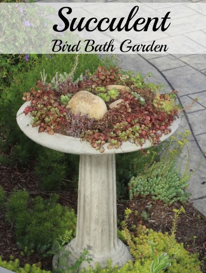 My succulent bird bath.