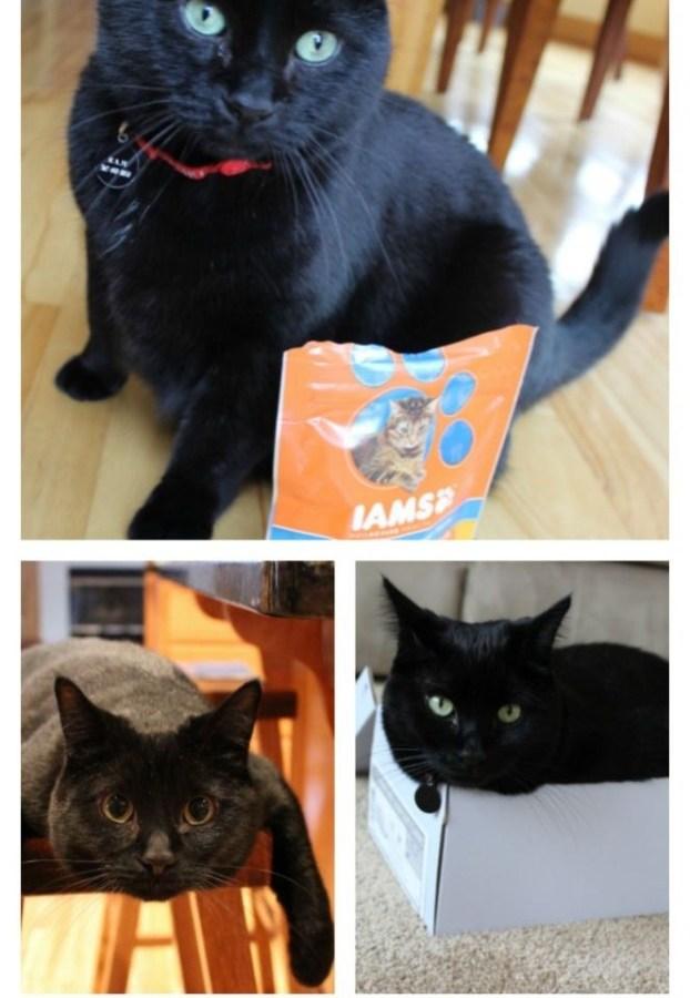 My Black Cat.  Why we love him.