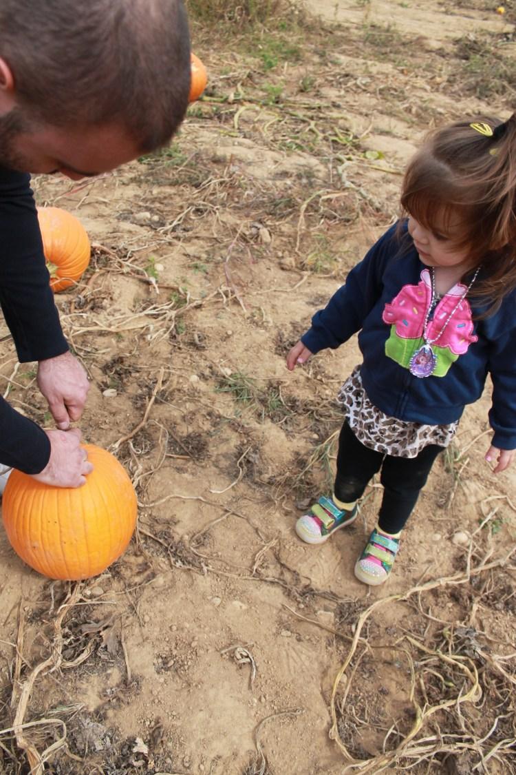 pumpkin picking 2013 034