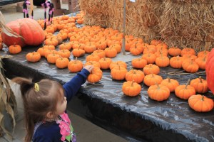 pumpkin picking 2013 052