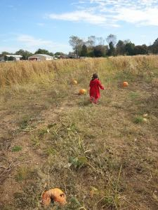 pumpkinpick