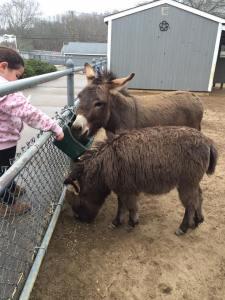 animal farm petting zoo