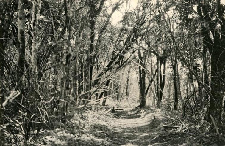 Jungle Track