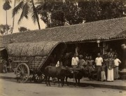 Bullock Cart in a Town