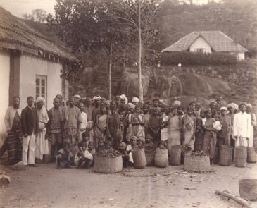 Group of Tea Estate Workers