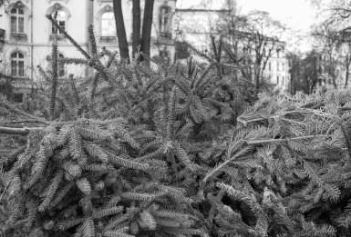 wsv_weihnachtsbaum-03393