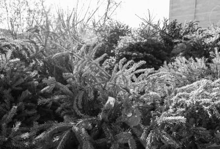 wsv_weihnachtsbaum-8848