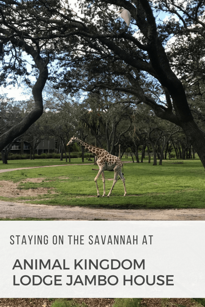 Staying on the Savannah at Animal Kingdom Lodge