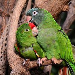 IMAGEN DE ENTRADA -  ANIMALES MAS INTELIGENTES