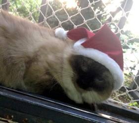 malala gato natal