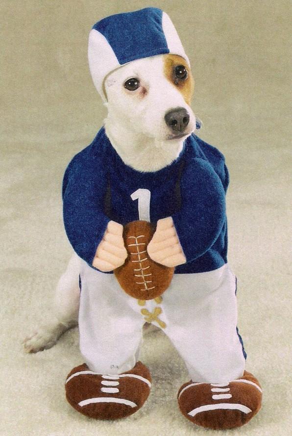 Dogcostume6