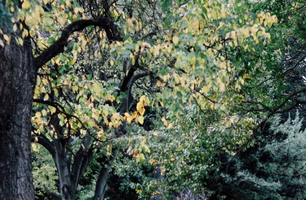 Autumn Leaves on Instagram