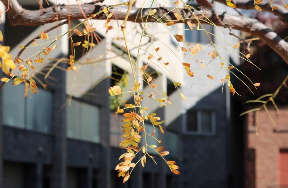 Autumn Leaves on Instagram (Urban Edition)